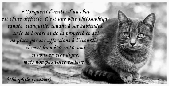 poeme chat