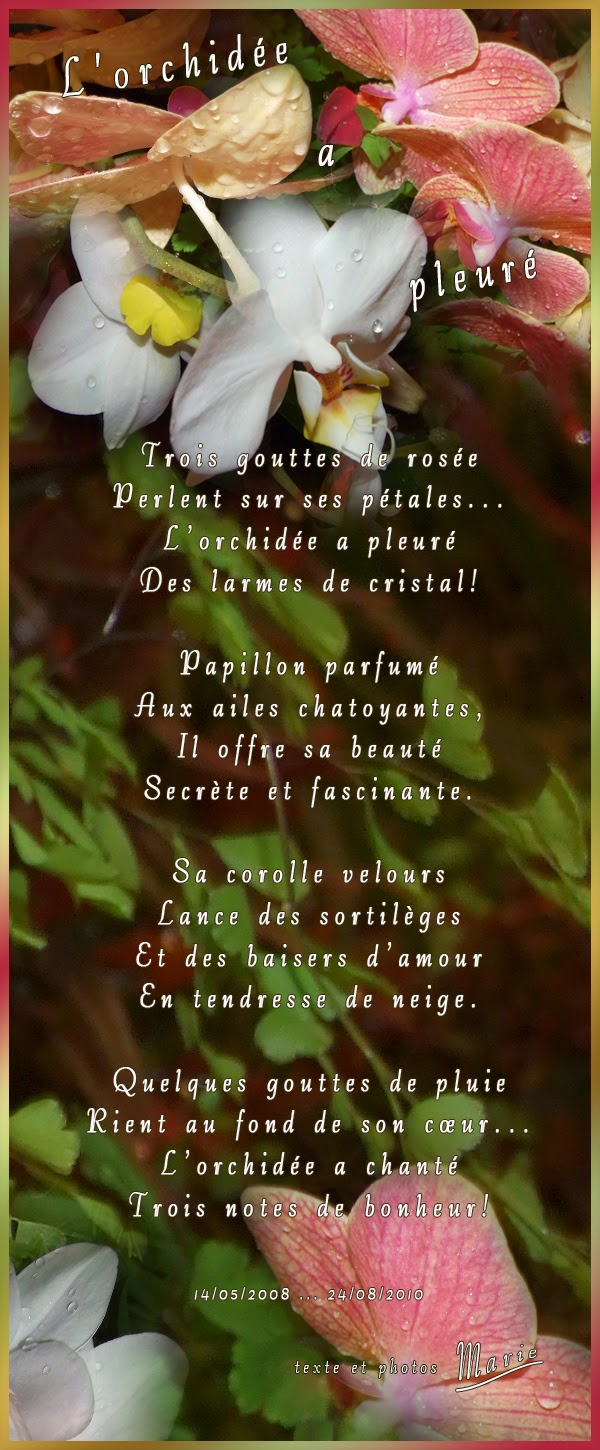 poeme orchidee