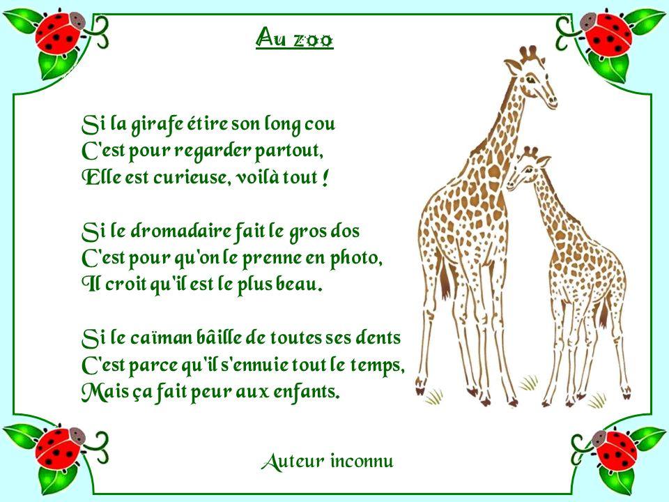 Zoo - Michel Butor