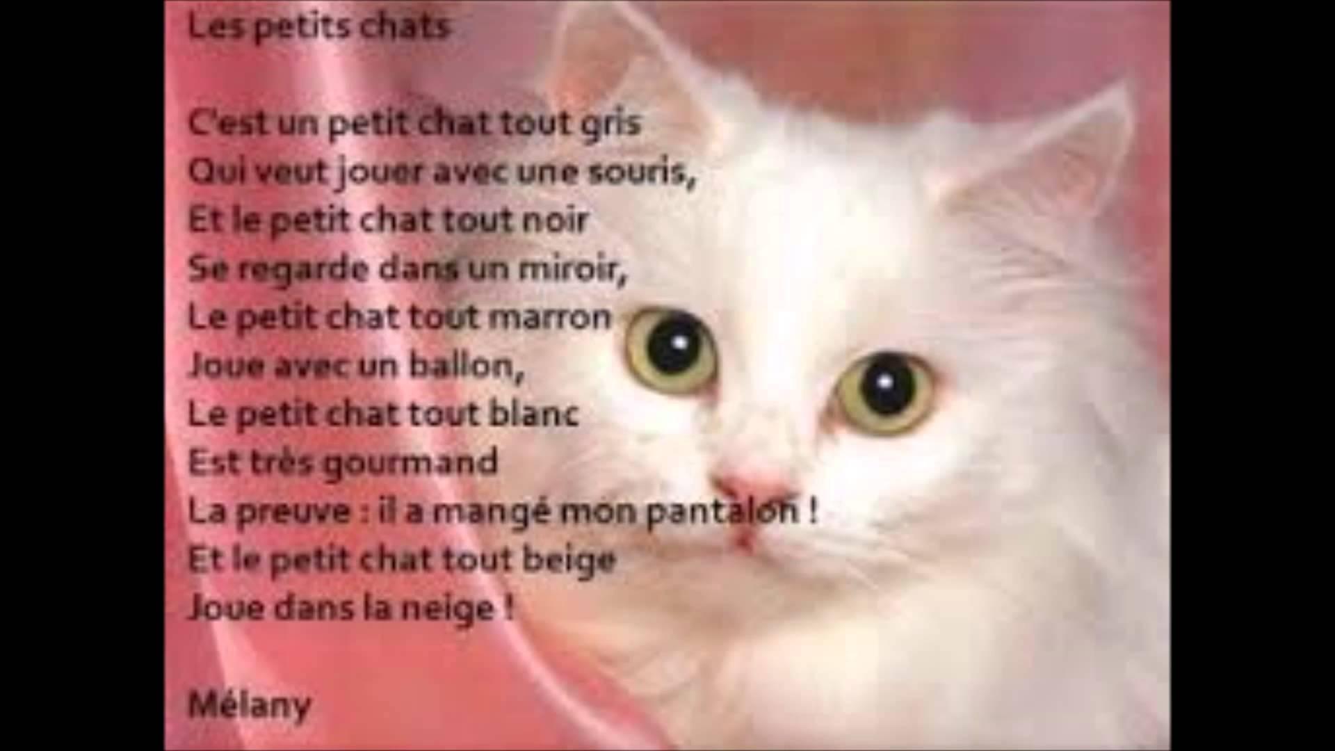 poesie chaton