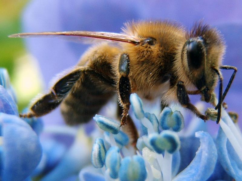 poesie gentille abeille