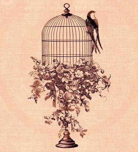 poesie j'ai ouvert la cage