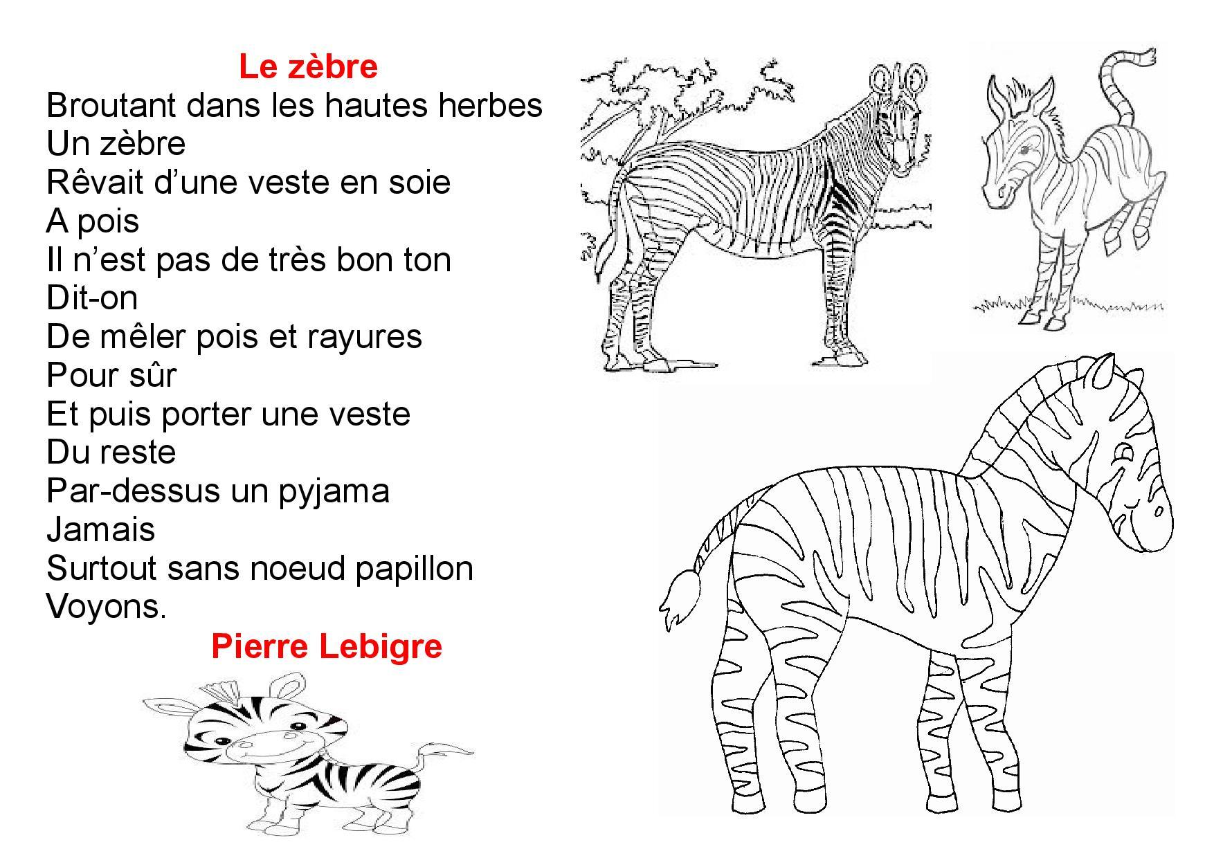poesie zebre