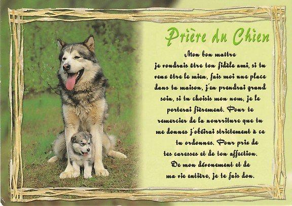 poeme chien